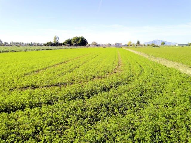 Ubebygd land til salgs i Dolores - € 128 000 (Ref: 5692320)