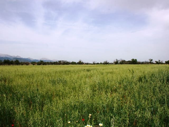 Grunde uden byggetilladelser til salg i Consell - € 230.000 (Ref: 4050085)