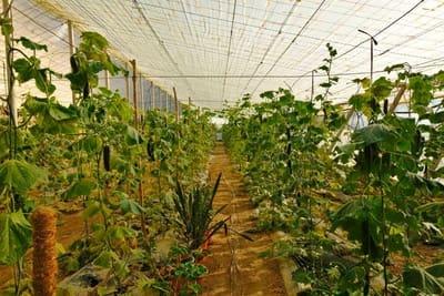 Terre non Aménagée à vendre à Algarrobo - 85 000 € (Ref: 5378691)