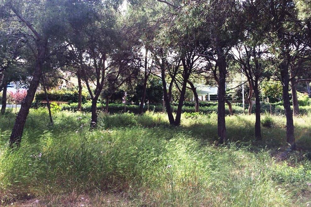 Terre non Aménagée à vendre à Calvia - 545 000 € (Ref: 5545468)