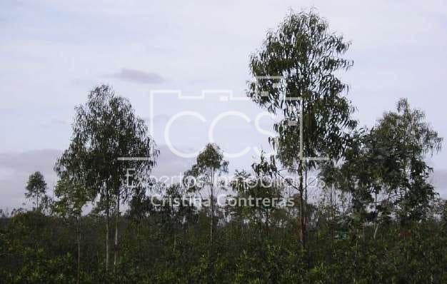 11 soveværelse Finca/Landehus til salg i Cabezas Rubias - € 11.095.000 (Ref: 4277627)
