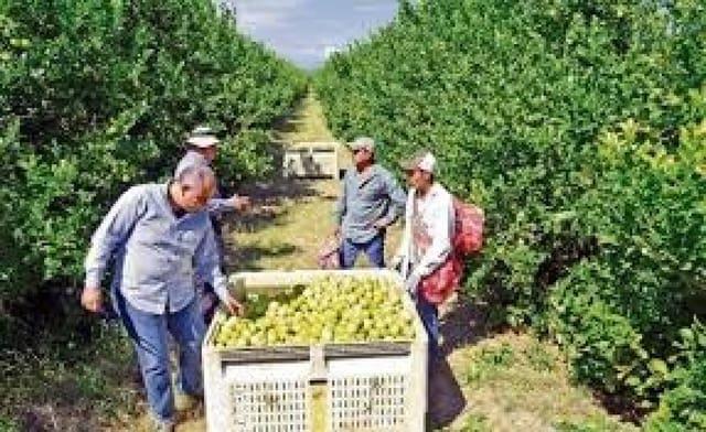 Terreno Não Urbanizado para venda em Pilar de la Horadada - 3 200 000 € (Ref: 5724641)