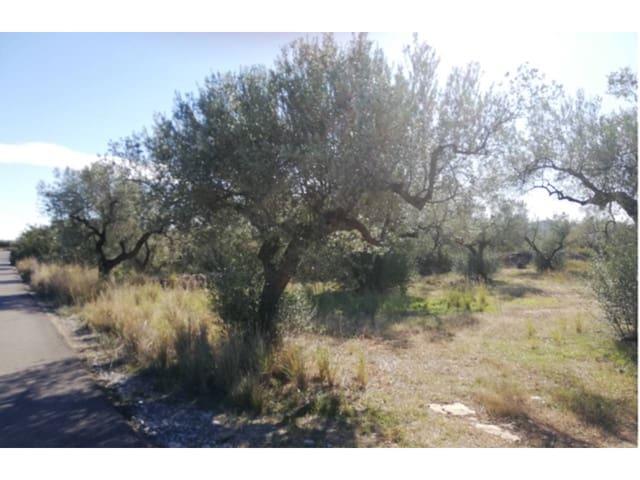 Landgrundstück zu verkaufen in Canet lo Roig - 10.000 € (Ref: 5266589)