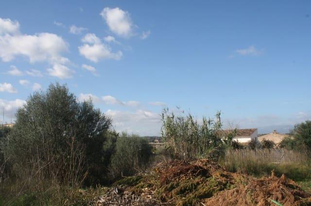 Terreno para Construção para venda em Sineu - 89 000 € (Ref: 5750971)