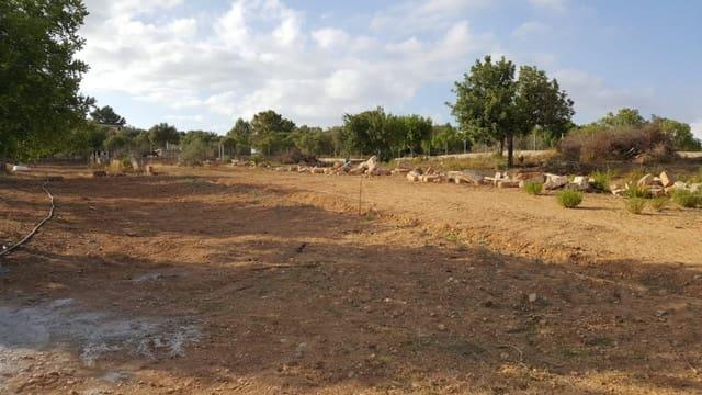 Terreno Não Urbanizado para arrendar em Llucmajor - 650 € (Ref: 6289123)