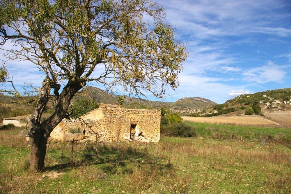 Terre non Aménagée à vendre à San Lorenzo - 1 000 000 € (Ref: 4379584)