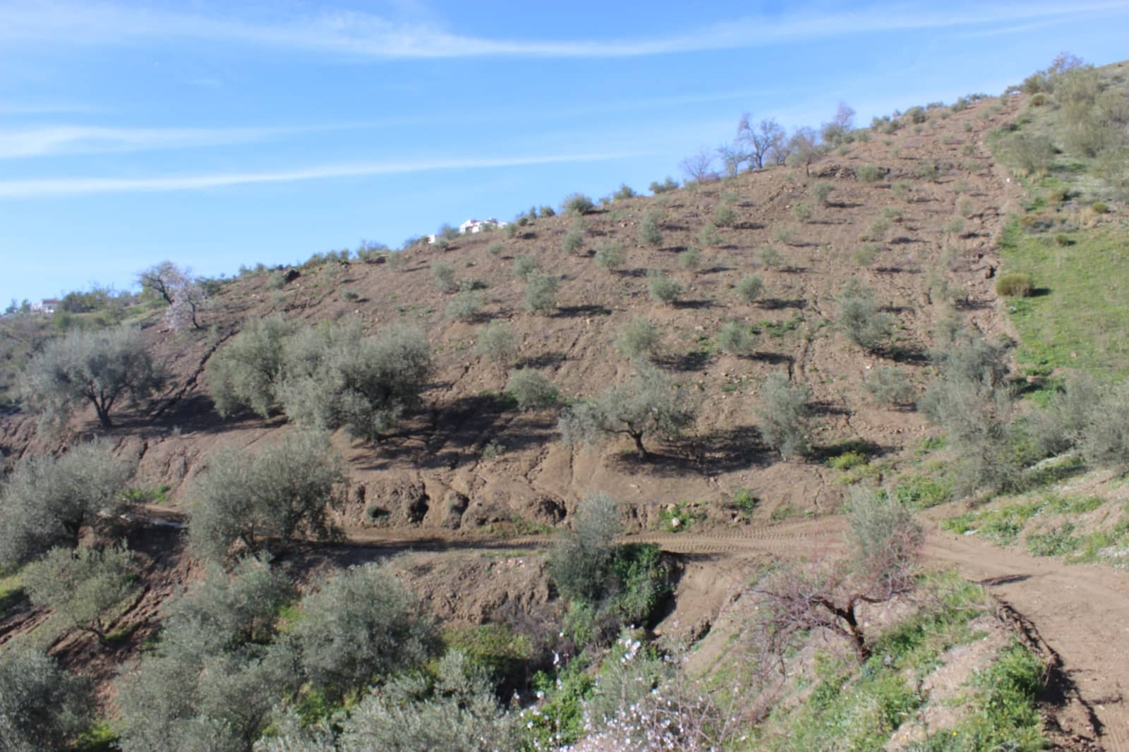 Undeveloped Land for sale in Canillas de Aceituno - € 79,000 (Ref: 5074523)