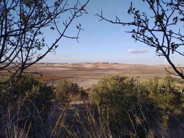 Terreno/Finca Rústica en Chiclana de la Frontera en venta - 80.000 € (Ref: 5898166)