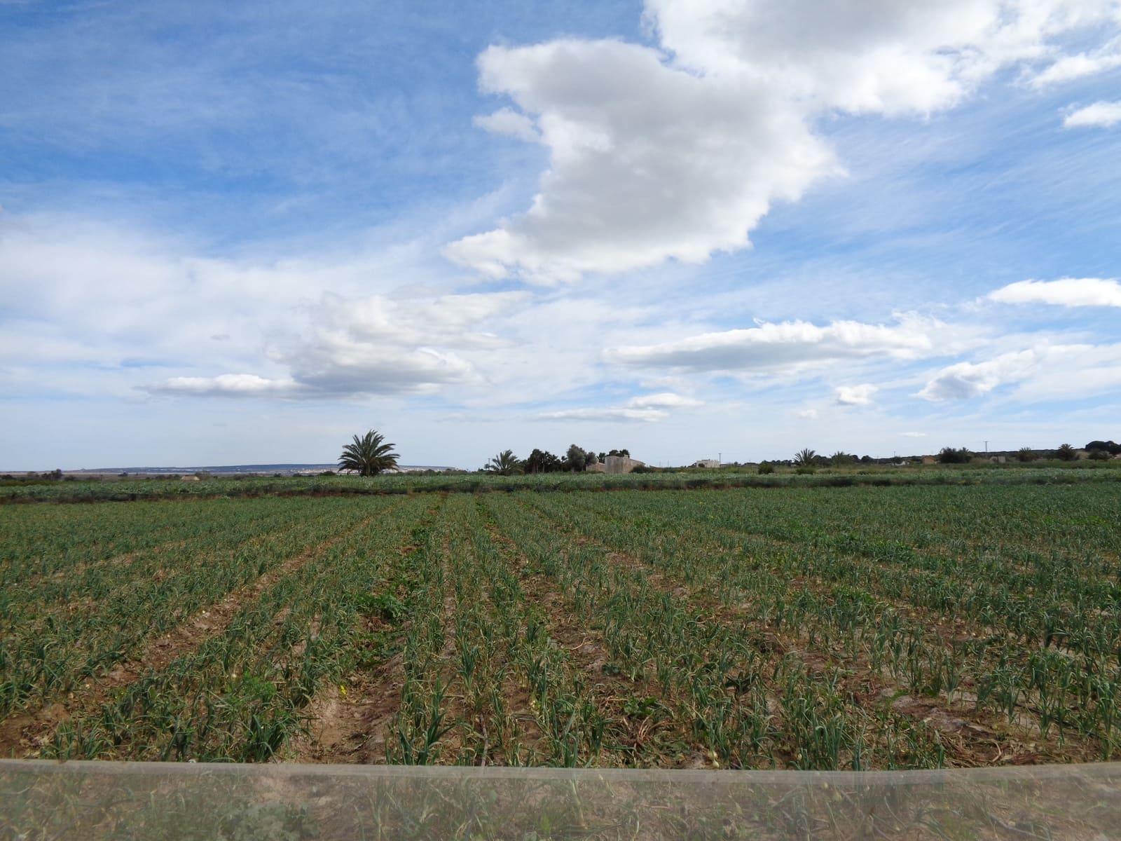 Ubebygd land til salgs i El Molar - € 90 000 (Ref: 5199690)