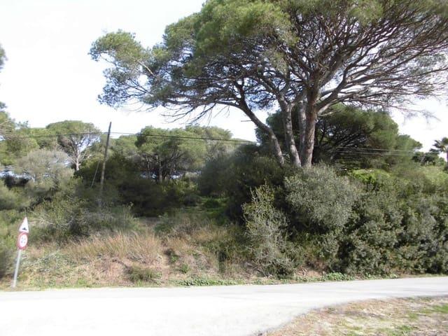 Terreno Não Urbanizado para venda em San Ambrosio - 70 000 € (Ref: 5986443)