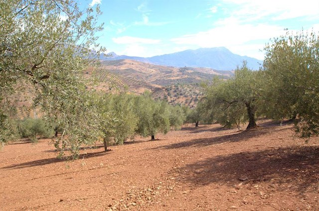 Ruin for sale in Cutar - € 188,000 (Ref: 3245806)