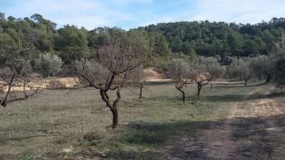 Finca/Landgut zu verkaufen in La Palma d'Ebre - 38.000 € (Ref: 2833602)