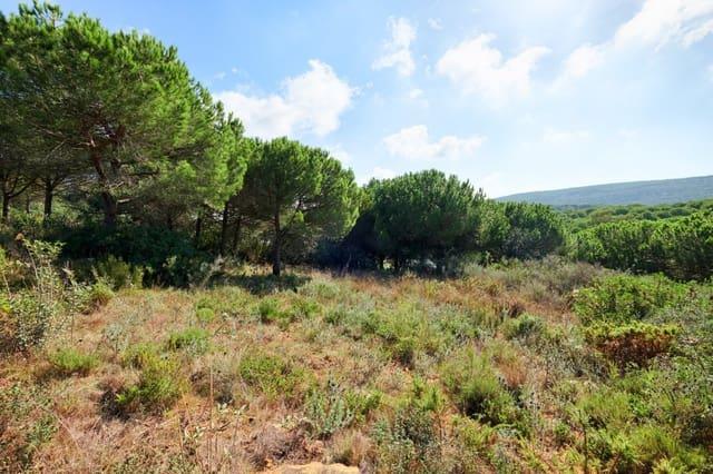 Terre non Aménagée à vendre à Sotogrande - 460 000 € (Ref: 5257531)