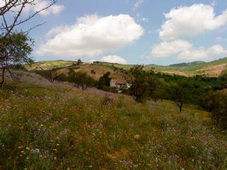 Ruin til salgs i Almogia - € 39 900 (Ref: 2075736)