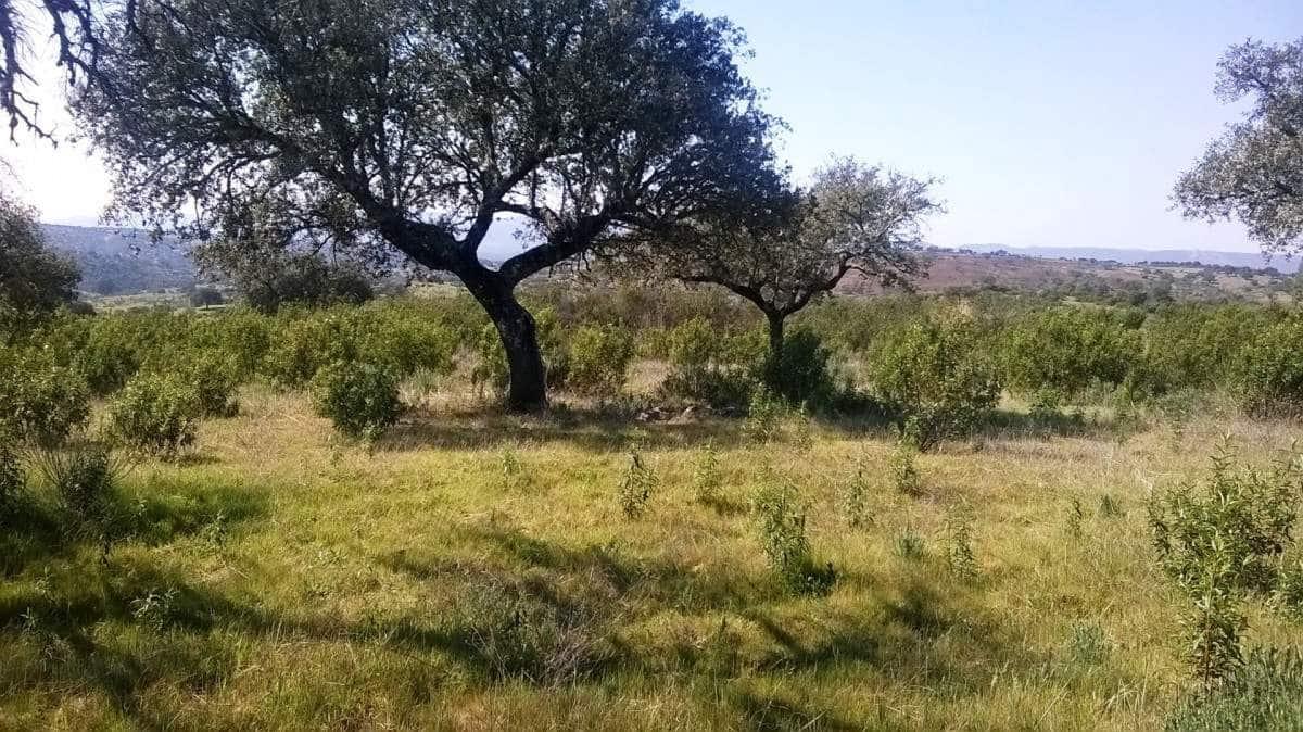 Terreno Non Edificato in vendita in Valverde del Fresno - 38.000 € (Rif: 5673494)