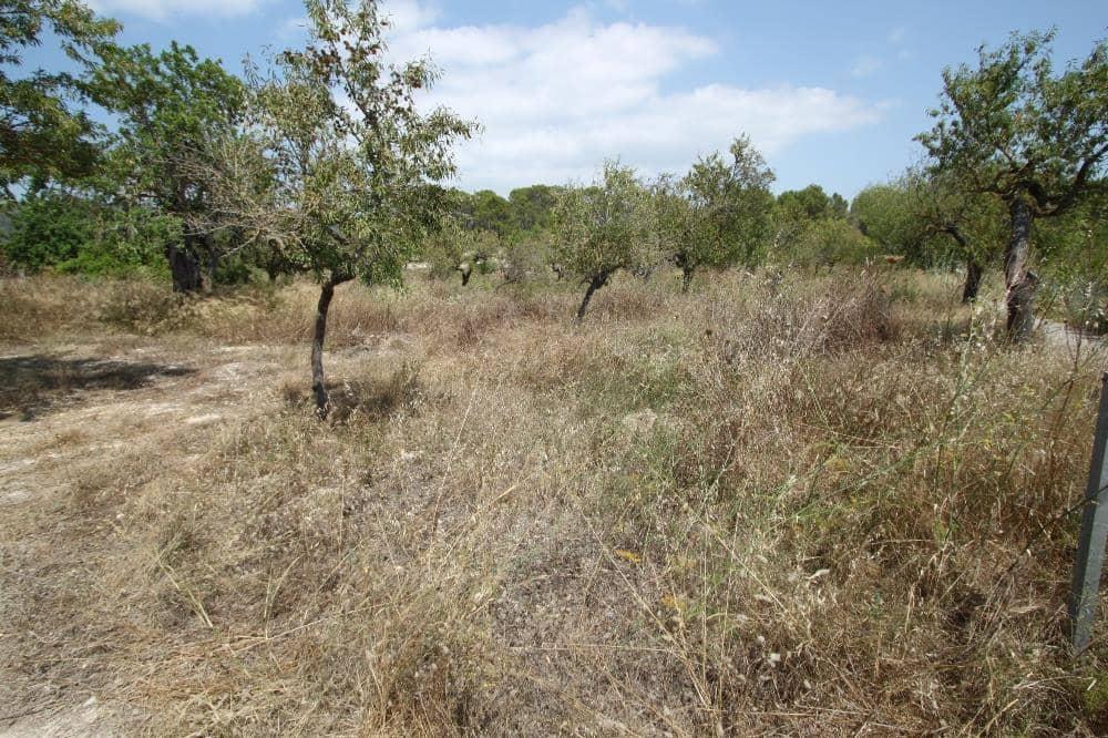 Terre non Aménagée à vendre à Calvia - 250 000 € (Ref: 5264798)
